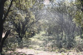 Allée de chêne, Carpentras